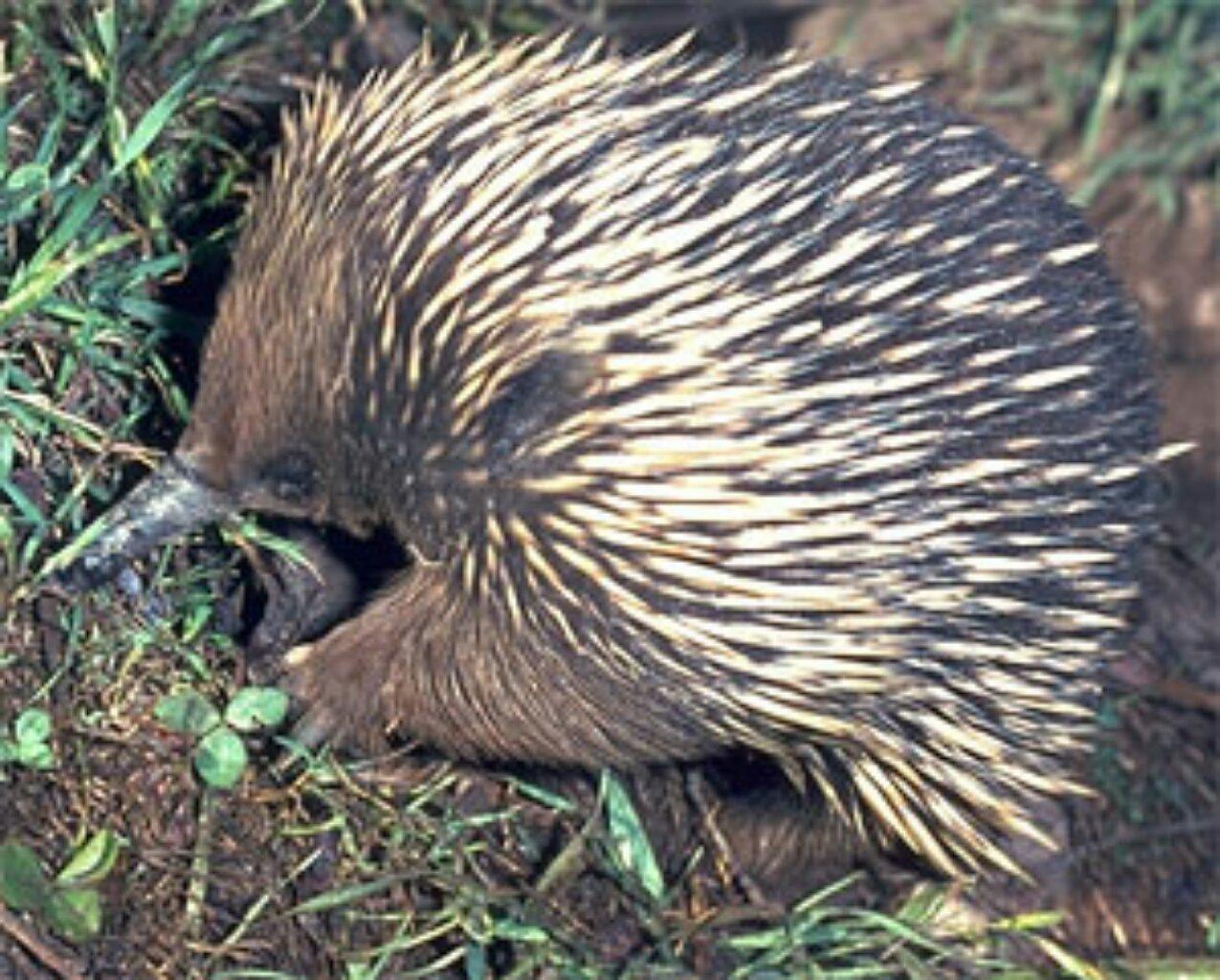 Awesome Amazingly Adapted Animals Of Australia 1 Year 1 Family 1 World